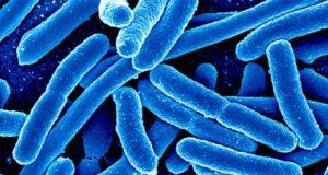Des bactéries pour détecter des maladies